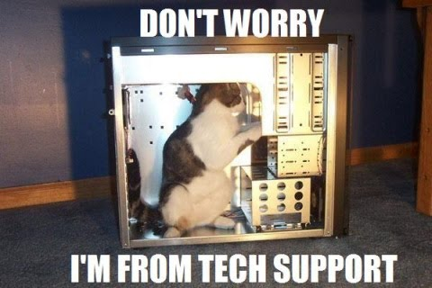 Crazy tech support kitty