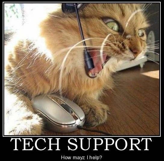 Angry tech support kitty